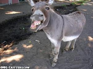 Josip Broz Tito - Page 6 Th_278970963_funny_jackass_donkey_grinning_ass_goofy_animal_picture_122_466lo